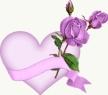 mawar ungu