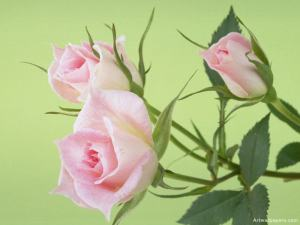 flowers01_800